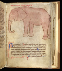 Drawing Of An Elephant, In A Compilation Of John Of Wallingford's Works